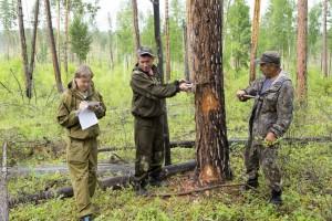 46_клеймение_леса